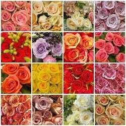 Roses of the Month