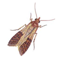 controlling pantry moths