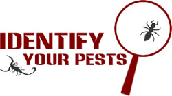 Identify Your Pests