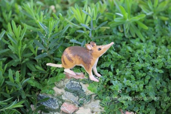 Bandicoot Miniature Fairy Garden