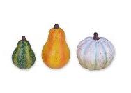 Miniature Gourds Gypsy Garden
