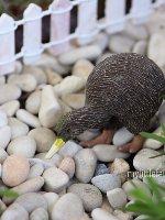 Kiwi Miniature Fairy Garden