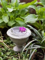 Miniature Urn Pick