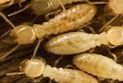 pest control companies Braselton GA, exterminators Braselton