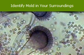 Learn The Basics Of Mold How It Is Formed And Dangers What Can Do To Your Home Human Beings Or Animals