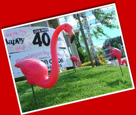 Flamingos by the Yard�