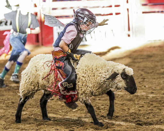 Moffat County Fair Family Rodeo