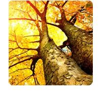 symbol: trees