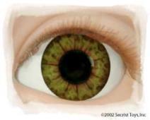 Eye Hazel