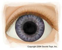 Eye Victorian Blue
