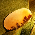 untreated oval agate from India