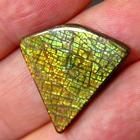 free from giant ammolite untreated with IGI report on fossil shell
