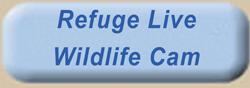 Ding Darling Wildlife Refuge