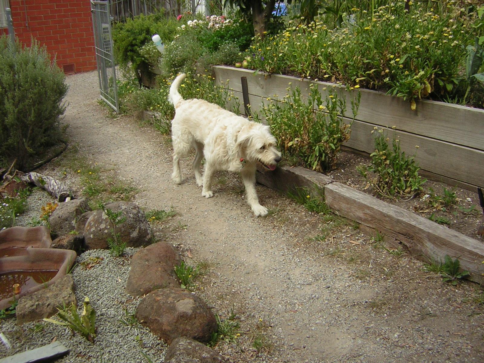 Happy Dog Day Care, - Testimonials - photo#20