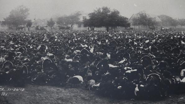 turkey trot historical photo of mass of turkeys