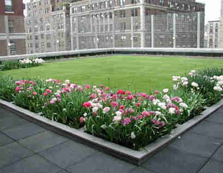 rooftop grass and flowers