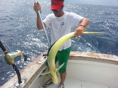 Hatteras Mahi Fishing