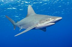 Hatteras Shark Fishing