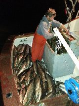 Hatteras King Mackerel Fishing