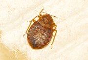 pest control companies Athens, exterminators Athens GA