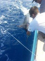 Hatteras Marlin Fishing