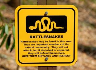 rattlesnake bite protection