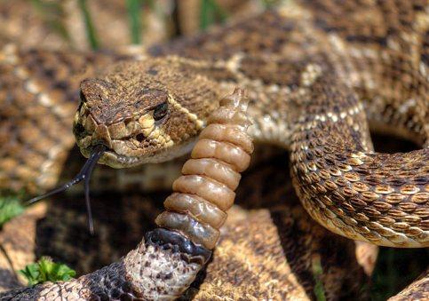 snake bite protection