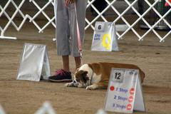 Open Dog Agility