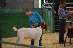 4-H/FFA Goat Show