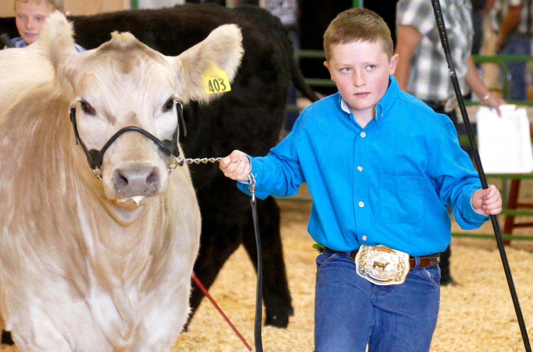 4-H/FFA Beef Show