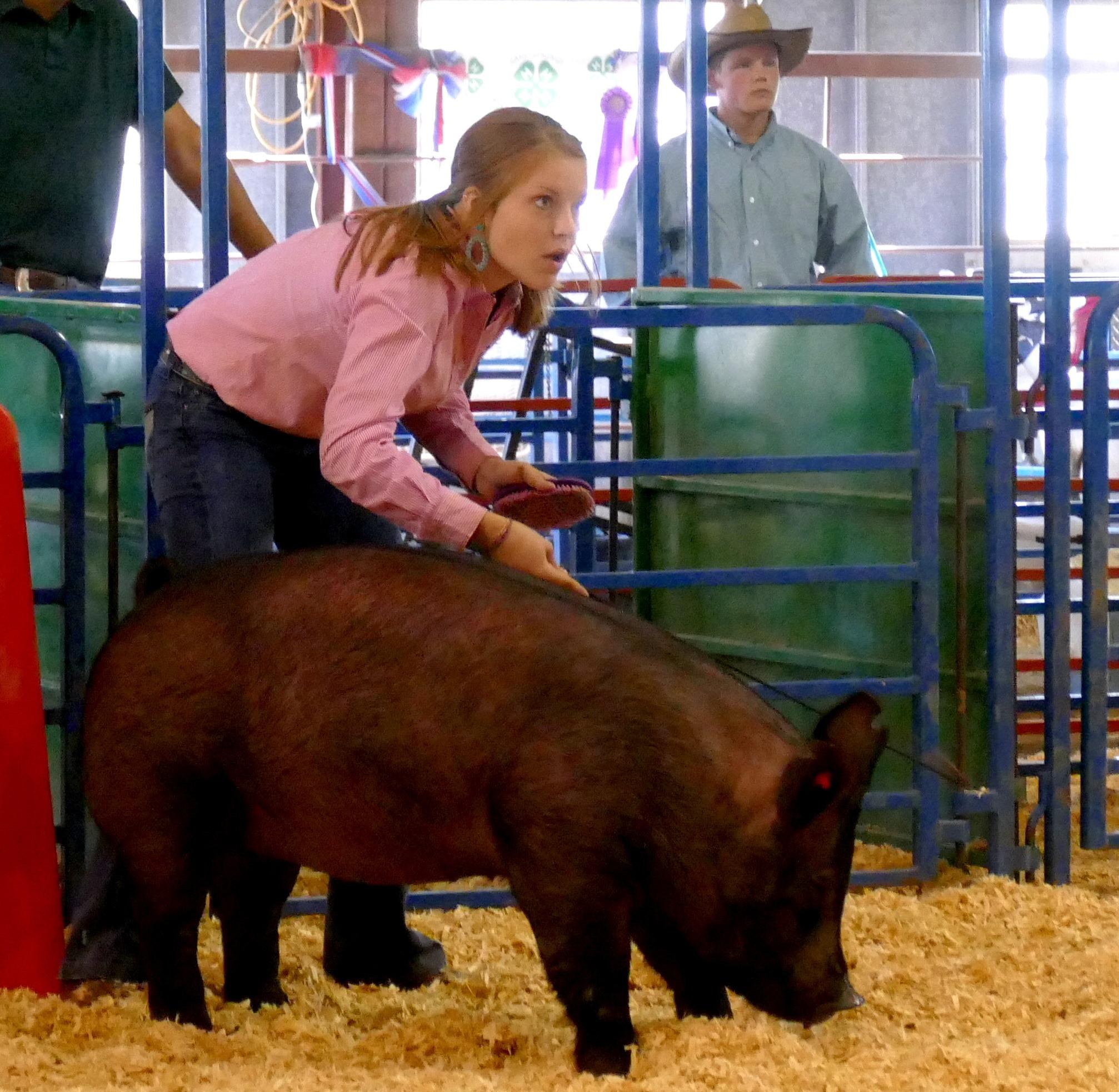 4-H/FFA Swine Show