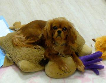 Hi!  My name is Ruby.  Here I am in my Princess Bed.  It is so soft and cuddly!  I love to cuddle here with my stuffies!