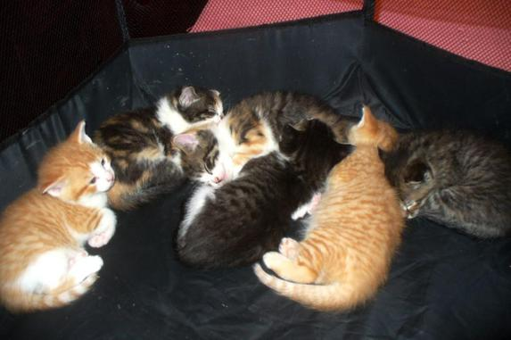 Click Photo to Access YouTube Videos of 2021 Kittens